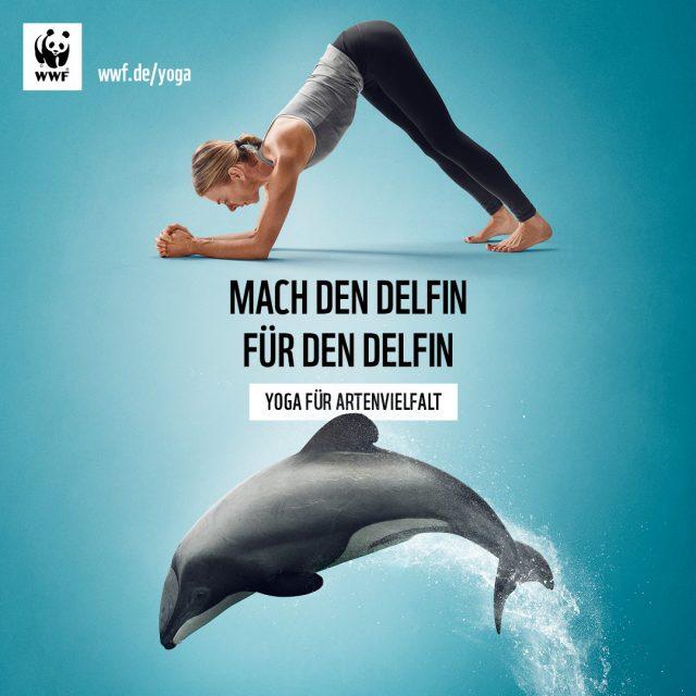 Mach den Delfin für den Delfin