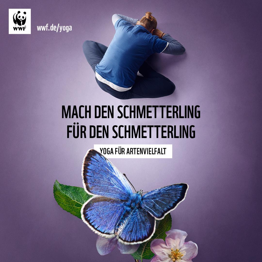 Mach den Schmetterling für den Schmetterling